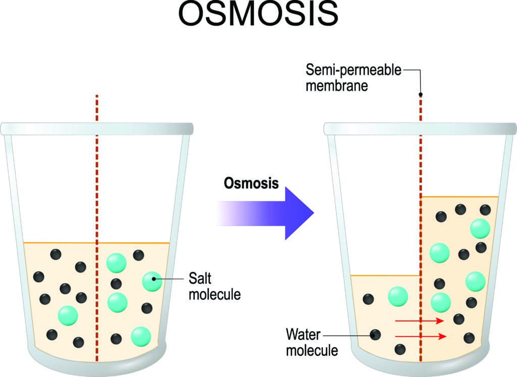 Concept Diagram | Osmosis